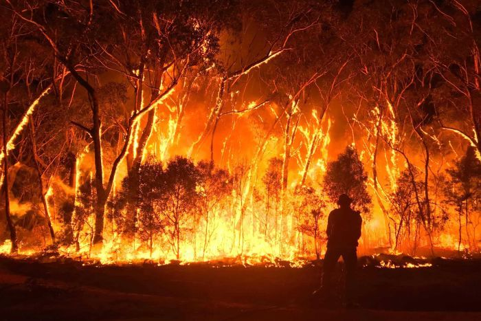 A photo of a firefighter fighting the Gospers Mountain fire, which has engulfed a all of the trees and scrub in the picture. Taken by Gena Dray, sourced from ABC News.